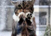 Kaķene skrāpējās aiz kafejnīcas loga un lūdza pēc palīdzības