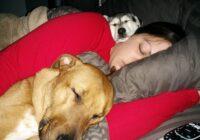 19 aizkustinoši attēli, kas vēlreiz apliecina-cilvēka labākais draugs ir suns