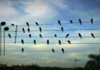 Vīrietis sakomponēja fantastisku dziesmu pēc tā kā putni sēdēja uz elektrības vadiem