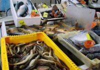 Vērtīgas zivis: Nosaukta zivs, kura ir visveselīgākā cilvēka uzturam
